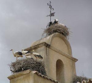 Distribution et écologie de la reproduction de la Cigogne blanche en Algérie