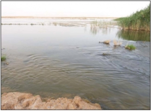 Biodiversité de l'avifaune aquatique des zones humides sahariennes (Algérie)
