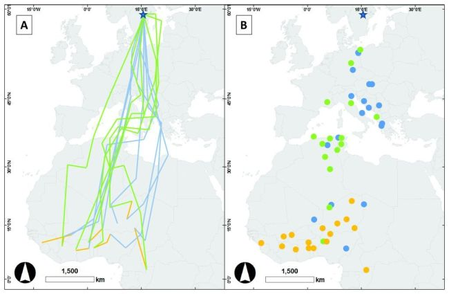 Inferred migration routes, mid-winter movements and stopover sites from geolocator data of male great reed warblers