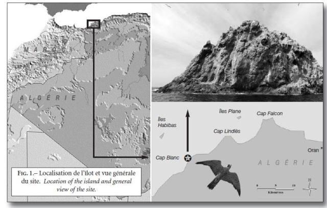 Localisation de l'îlot et vue générale du site de la reproduction du Faucon d'Éléonore (Falco eleonorae)