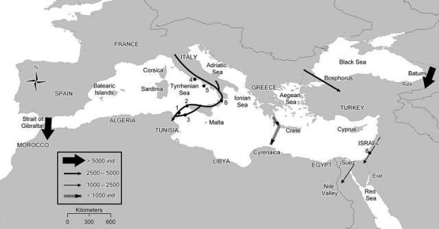 Flyways used by Black Kites (Milvus migrans migrans) during autumn migration