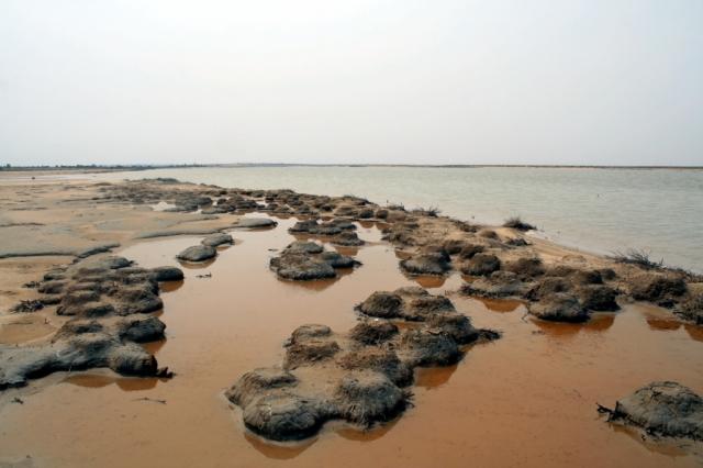 Site de reproduction du Flamant rose (Phoenicopterus roseus) dans la lagune de Halk El Menzel, Tunisie (photo: Ridha Ouni)