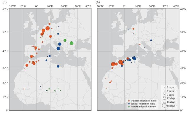 Main stopover sites for Montagu's Harrier (Circus pygargus), for (a) autumn and (b) spring migration.