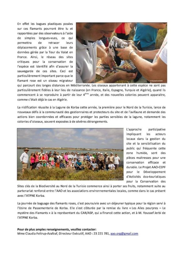 "Press release of Association ""Les Amis des Oiseaux"" (AAO) about the ringing operation of Greater Flamingo at the lagoon of Korba."
