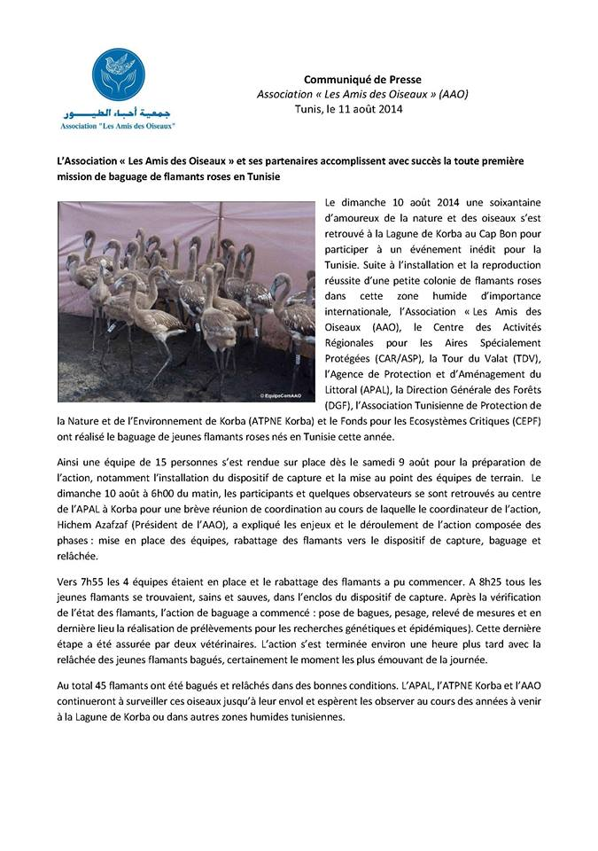 """Press release of Association """"Les Amis des Oiseaux"""" (AAO) about the ringing operation of Greater Flamingo at the lagoon of Korba."""