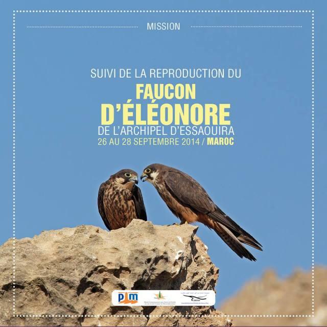 Suivi de la Population du Faucon d'Eléonore (Falco eleonorae) de l'Archipel d'Essaouira, Maroc
