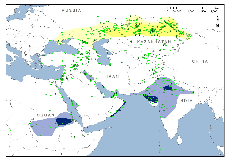 Global distribution of Sociable Lapwings (Vanellus gregarious) (map: BirdLife International).