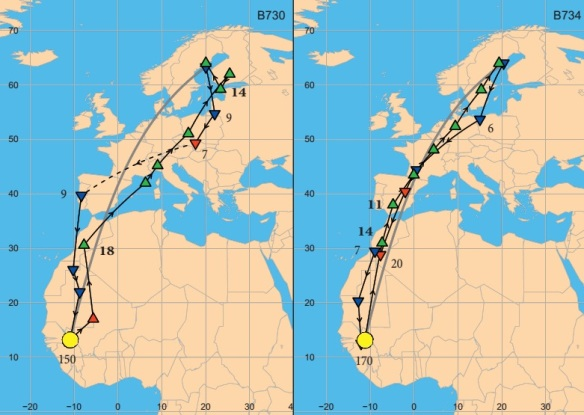 Migration routes for Ortolan Buntings (Emberiza hortulana) between Sweden and sub-Saharan Africa