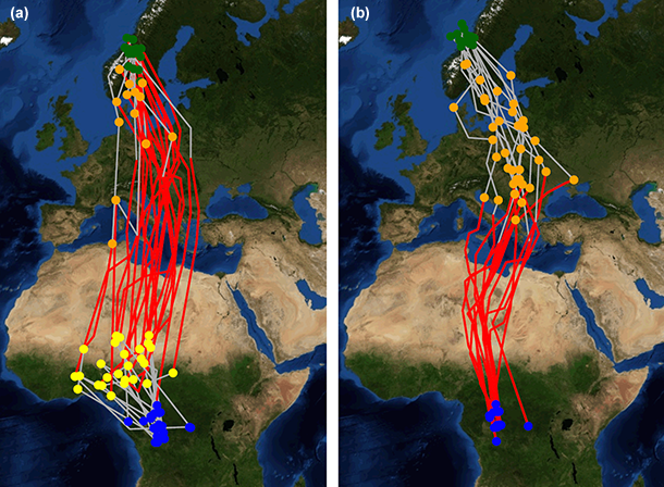 The autumn (a) and spring (b) migration of great snipes travelling between the breeding site in Sweden and their winter quarters in central Africa