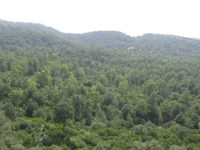 Forest of Boumezrane / Forêt de Boumezrane, Souk-Ahras, Northeastern Algeria